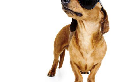 creative dog photography melbourne