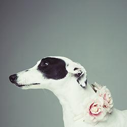 Pets; dogs, cats, goldfish, birds, rabbits - surprise us!
